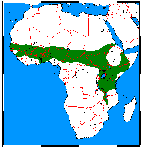 http://upload.wikimedia.org/wikipedia/commons/0/0d/Atelerix_albiventris_range_map.png