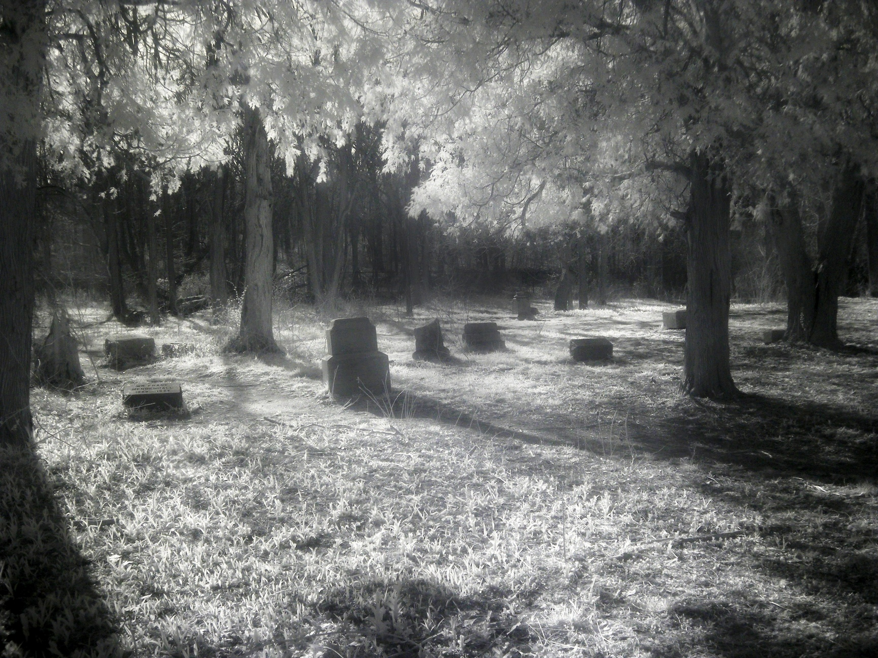 An eerie image of a forest with tombstones taken at Bachelors Grove Cemetery