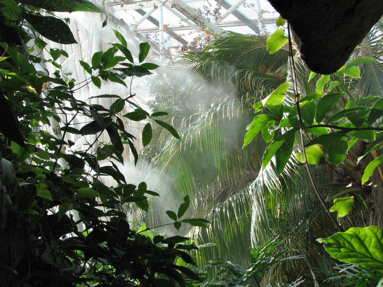 Baltimore_Aquarium_-_Rain_forest Frais De Aquarium original Des Idées
