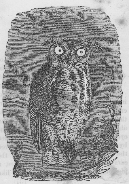 file black and white owl drawing jpg