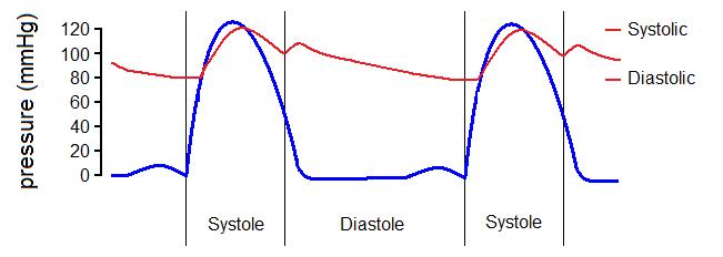 relationship between ecg and pulse