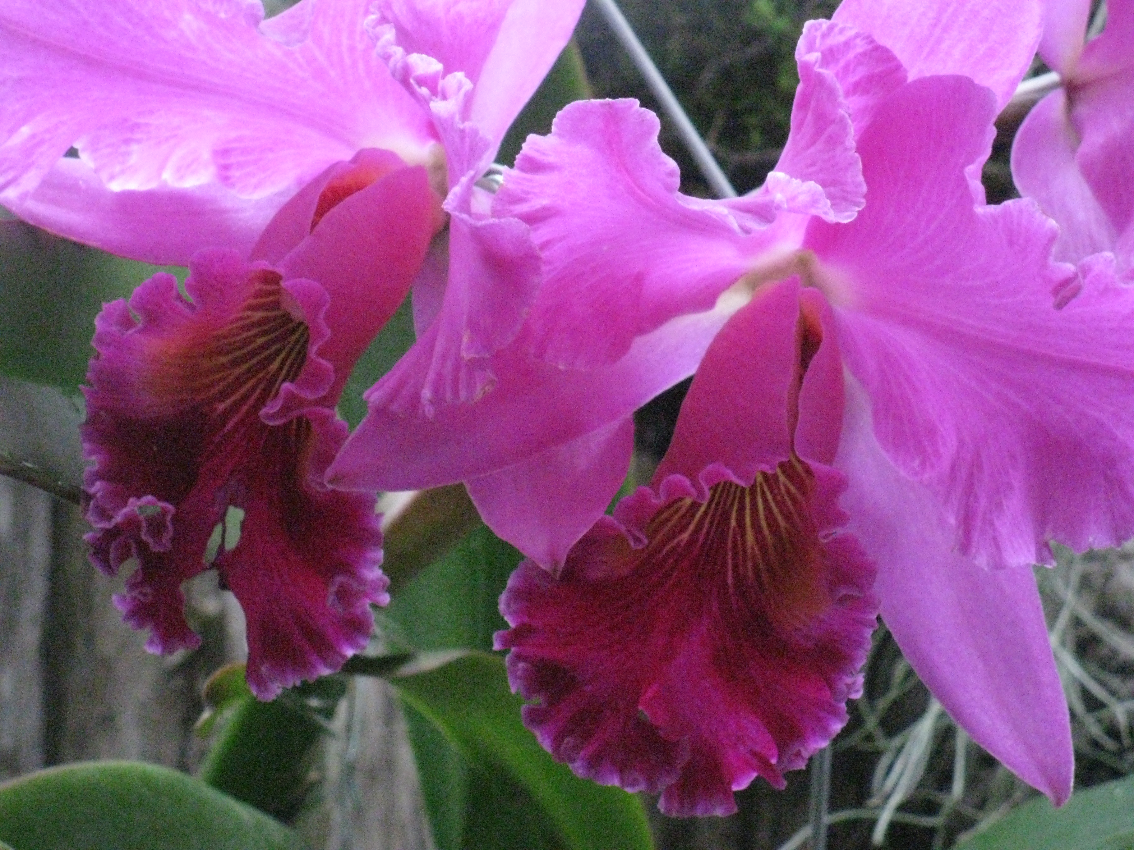 dating the origin of orchidaceae