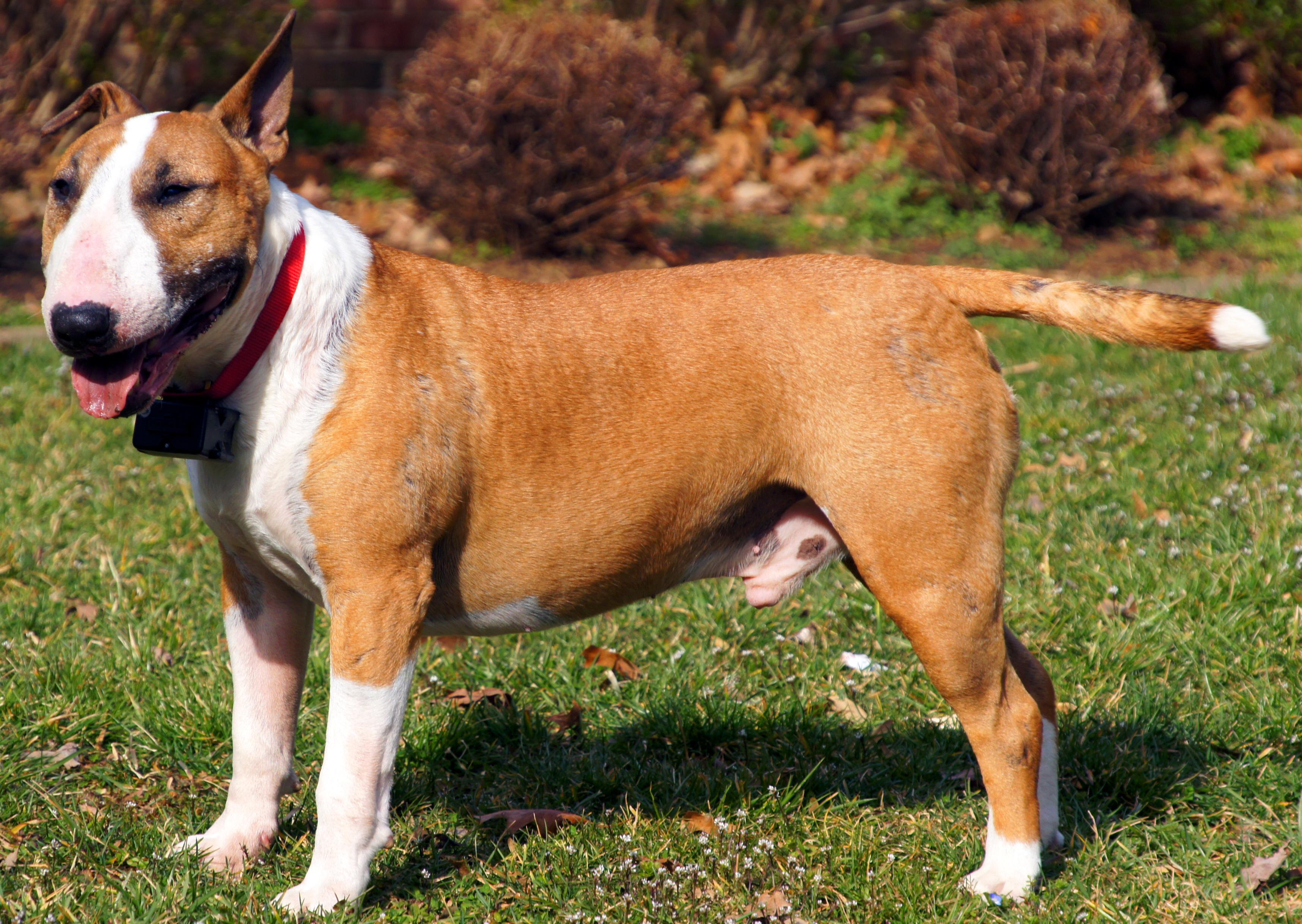 Image Result For Good Dog Training