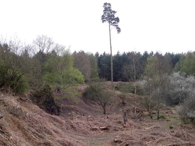 Crag pit - Tunstall Forest. - geograph.org.uk - 399417