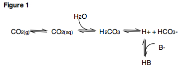 Figure 1. Important acid-base reactions involving carbon dioxide.