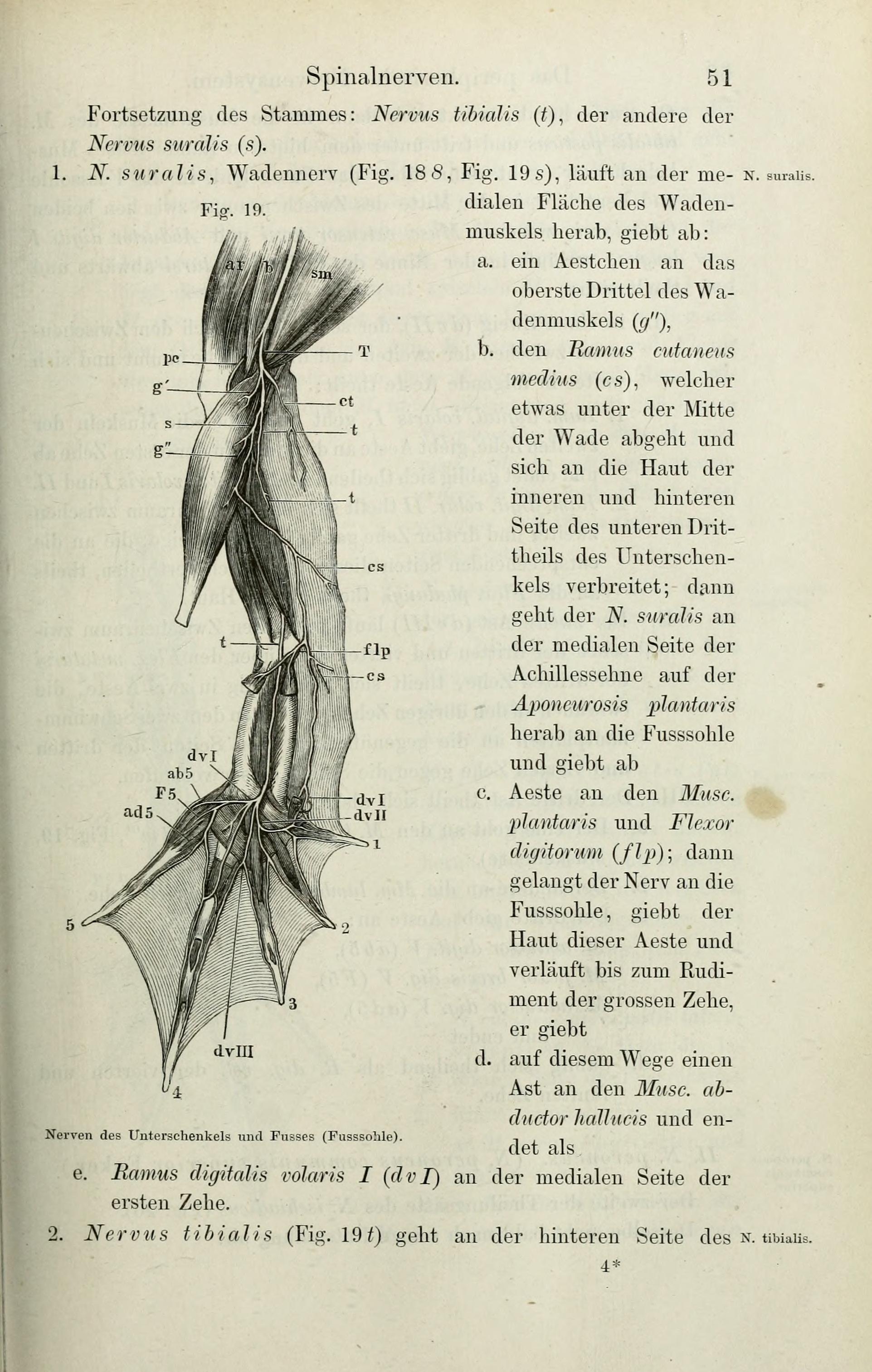 Fein Innere Anatomie Eines Frosches Fotos - Anatomie Ideen - finotti ...