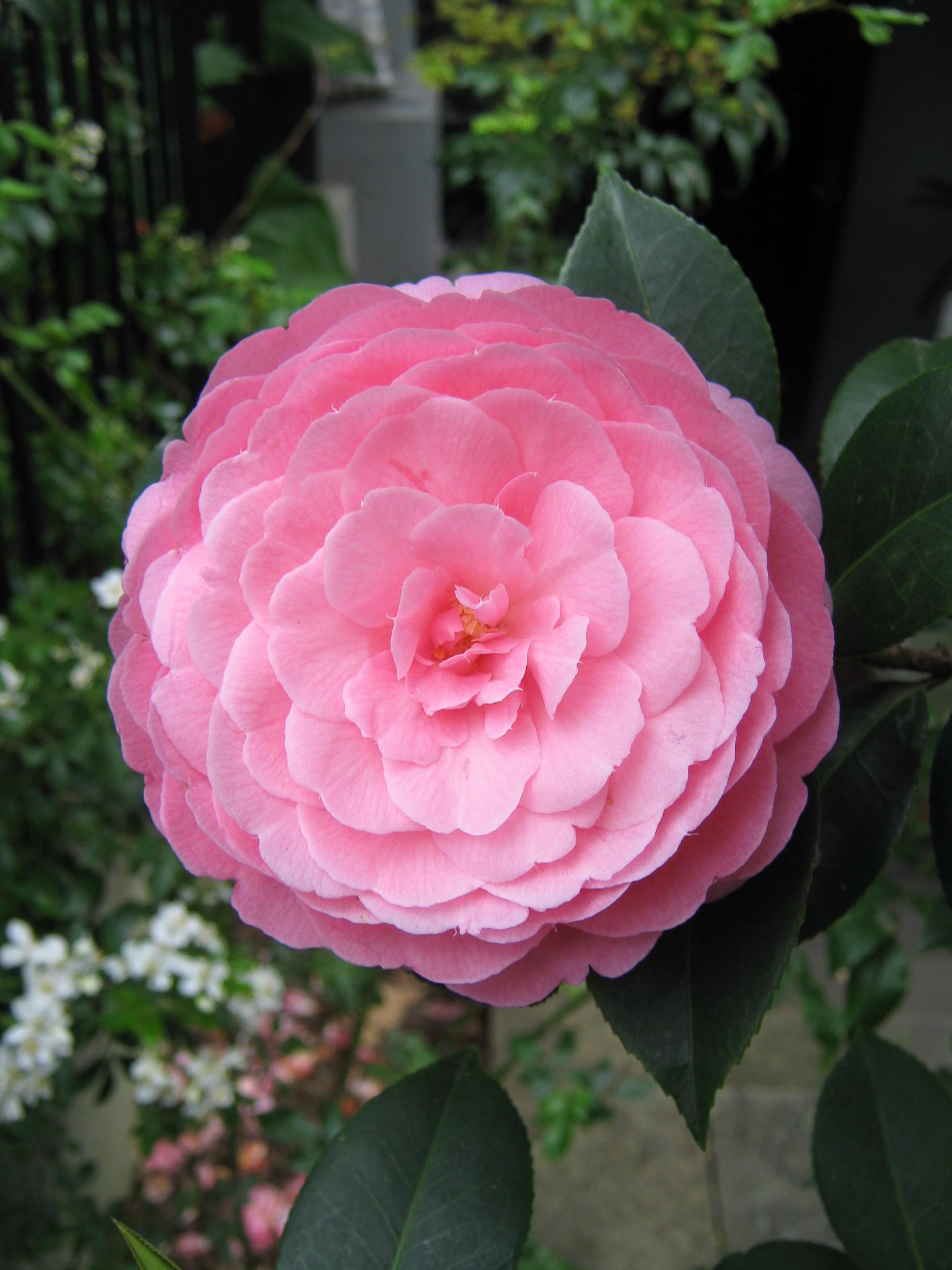 Eben Gowrie Waterhouse - Wikipedia on
