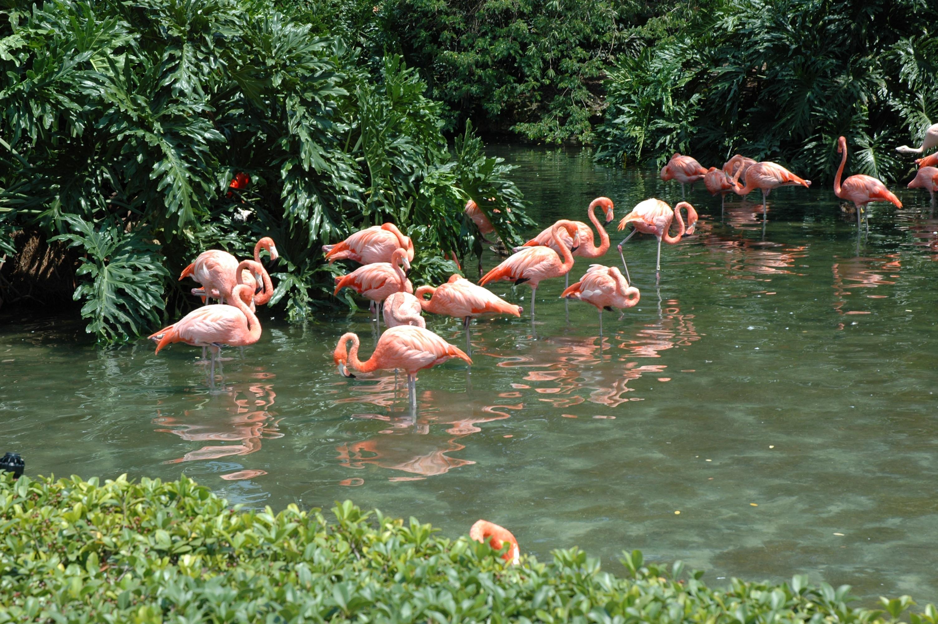 File Flamingo Point Orlando Florida SeaWorld Wikimedia mons