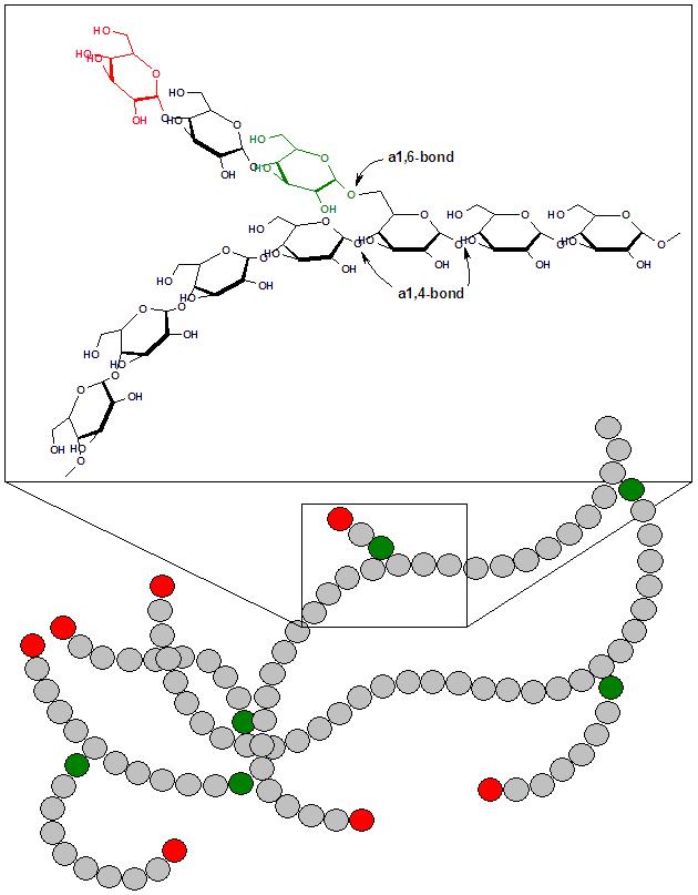 Budowa cząsteczki glikogenu