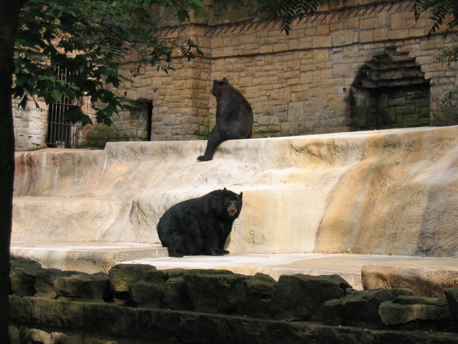 things to do in madison -  Henry Vilas Zoo