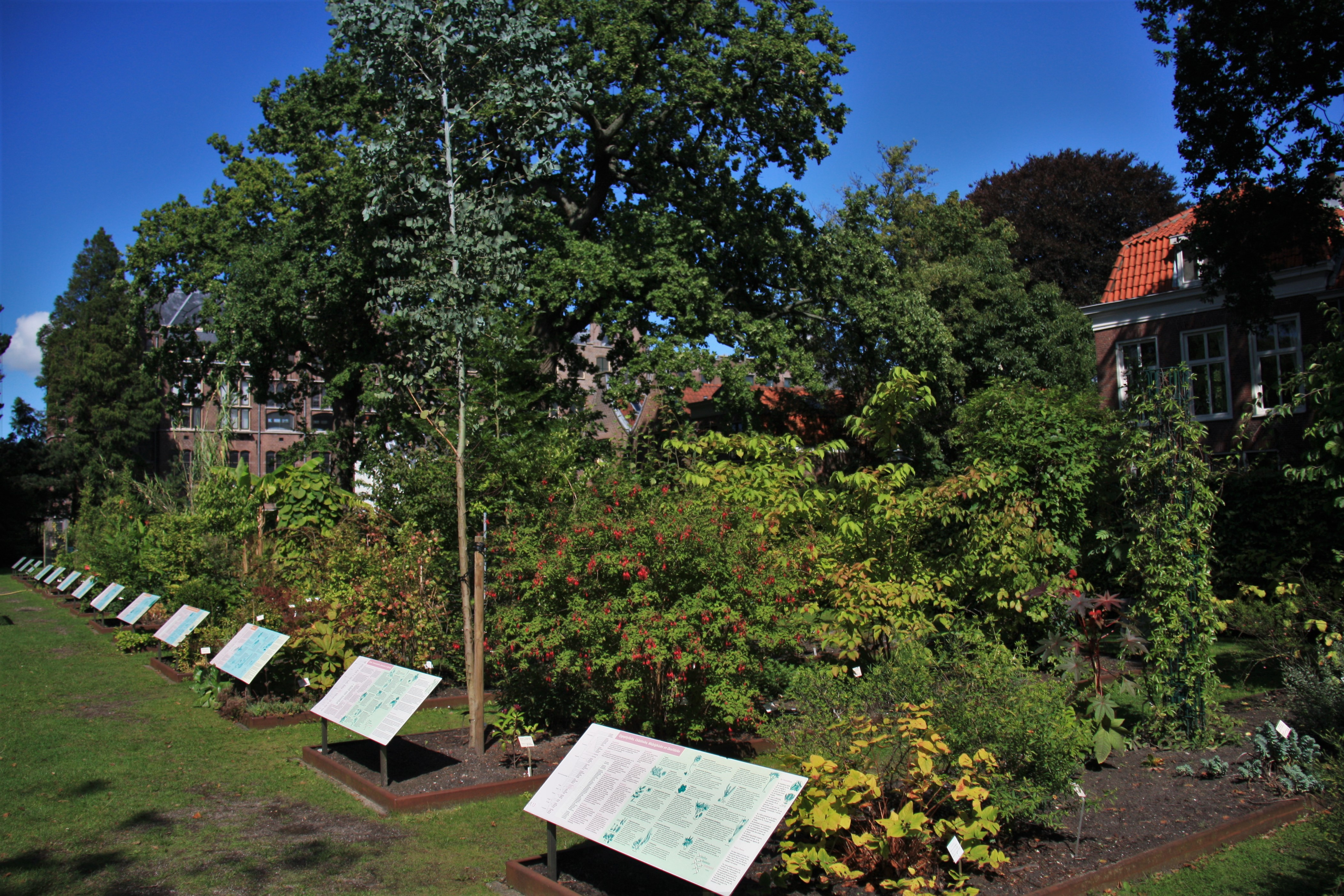 Botanische Tuin Leiden : Файл hortus botanicus leiden systematic garden g u Вікіпедія