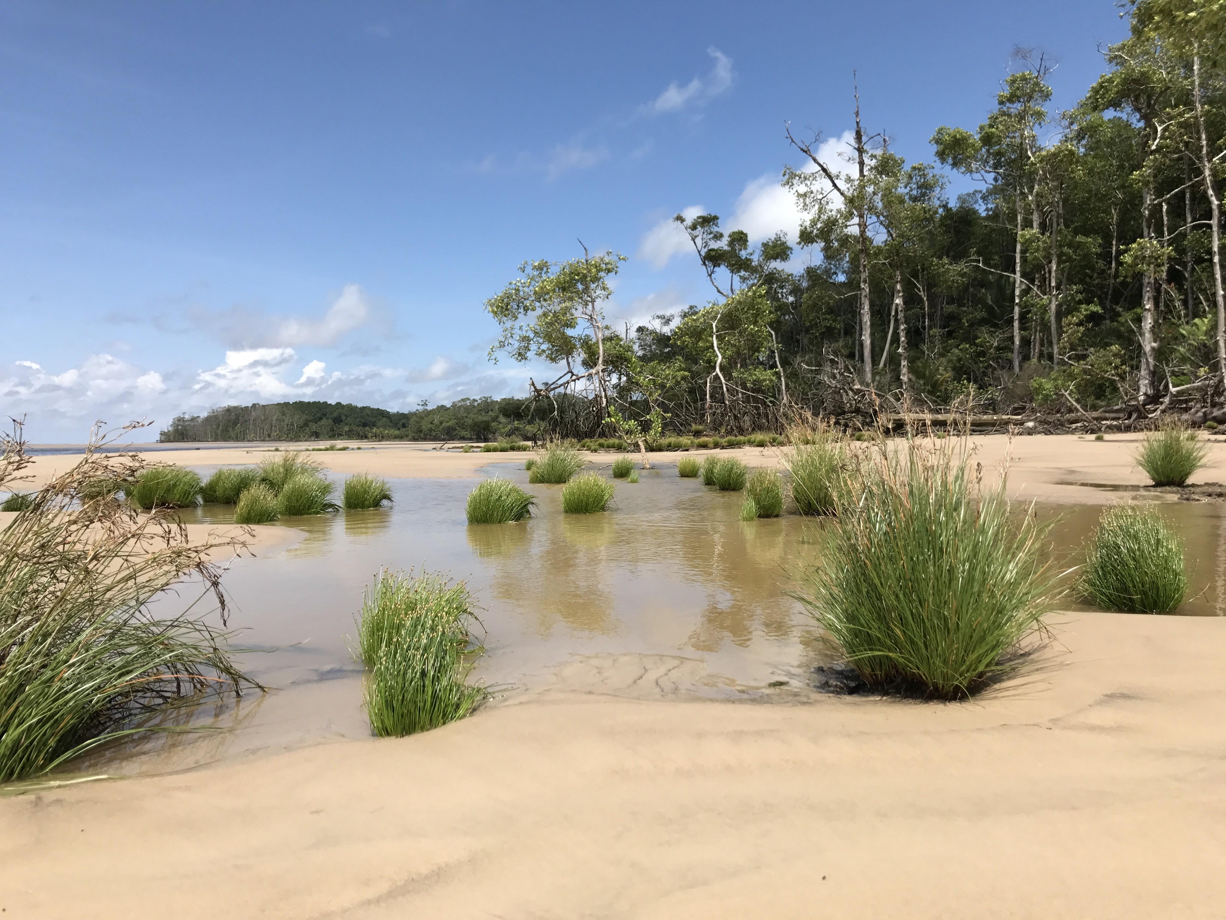 File:Ilha de Marajó vegetação rasteira.jpg - Wikimedia Commons
