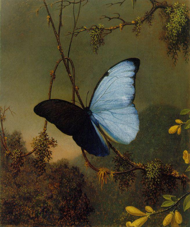 Motyl Ogród Petenery Fandom
