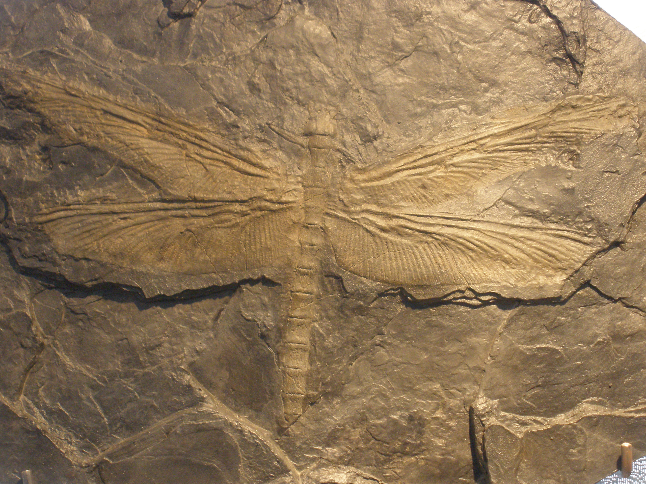 Fossil Pictures 9
