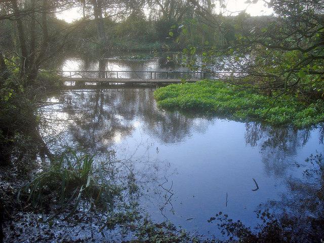 Mill pond near Papplewick - geograph.org.uk - 1651777