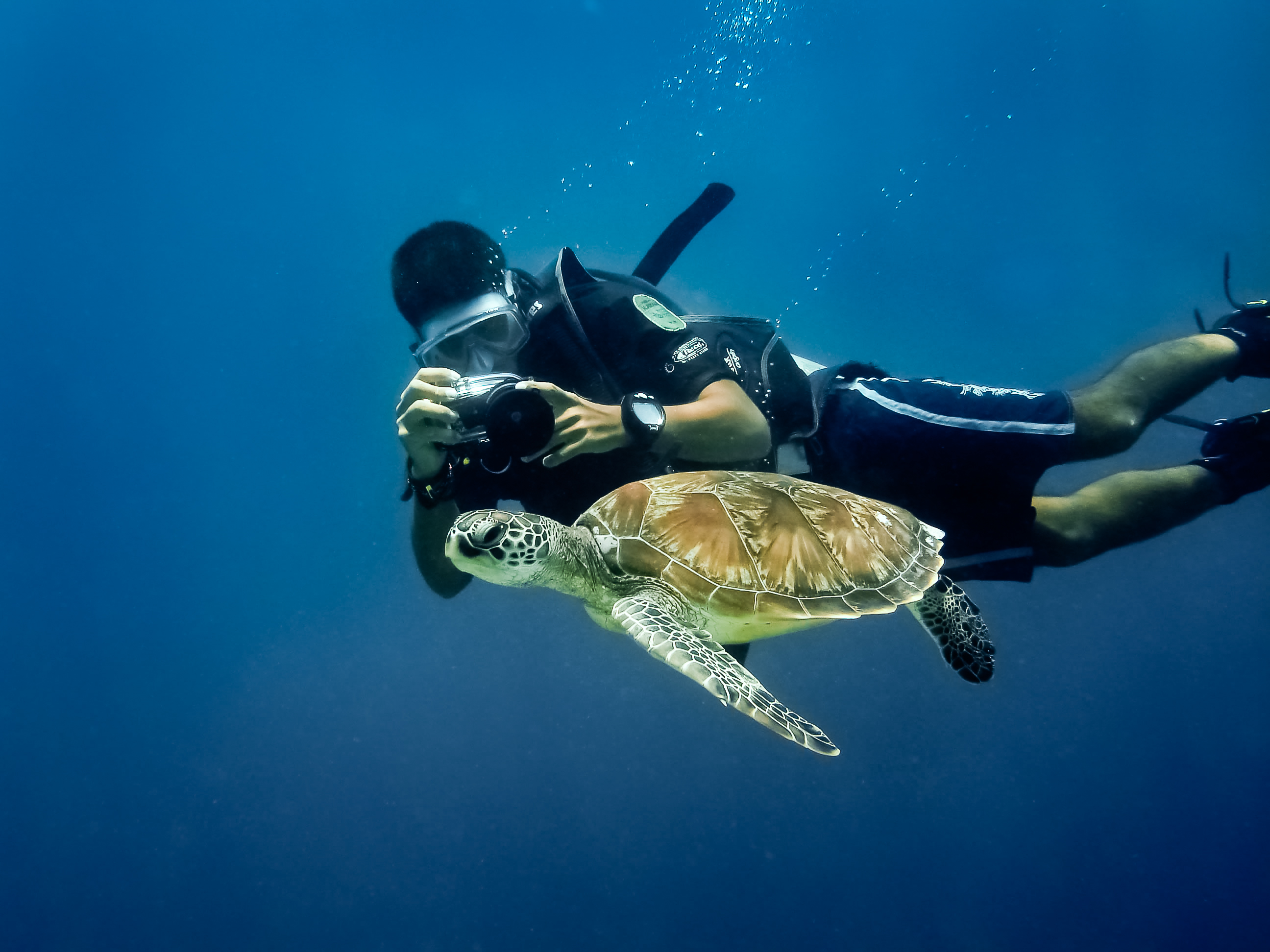 Snorkeling with turtle in Blue bay