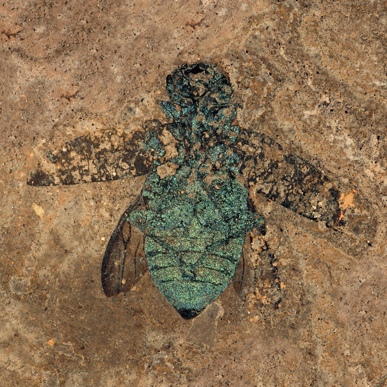 messel ein fossiles tropenkosystem senckenbergbuch