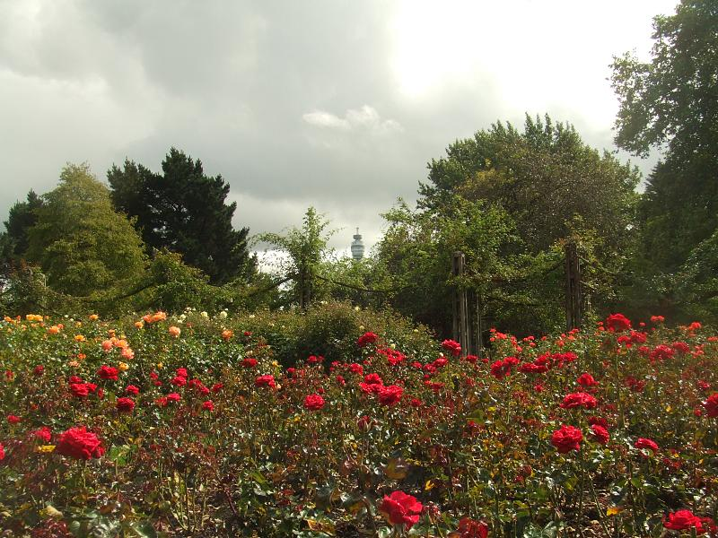 Queen Mary's Rose Garden.jpg