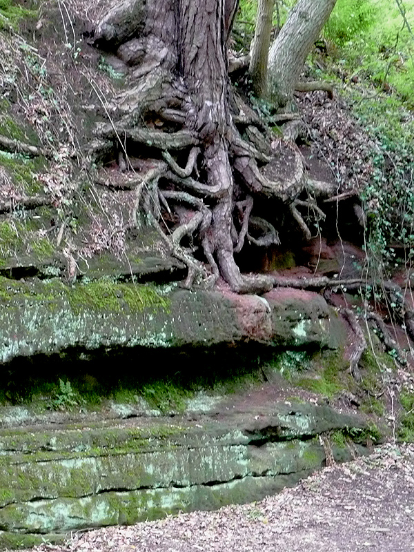 File:ROCK AND ROOTS by the canal at Tyrley, Shropshire - geograph ...
