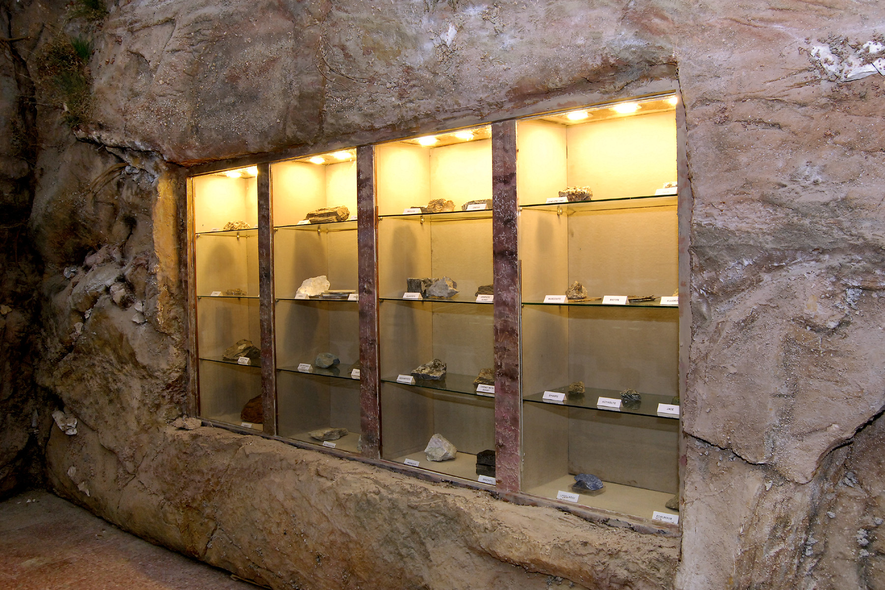 bio ikast Natural History Museum kbh