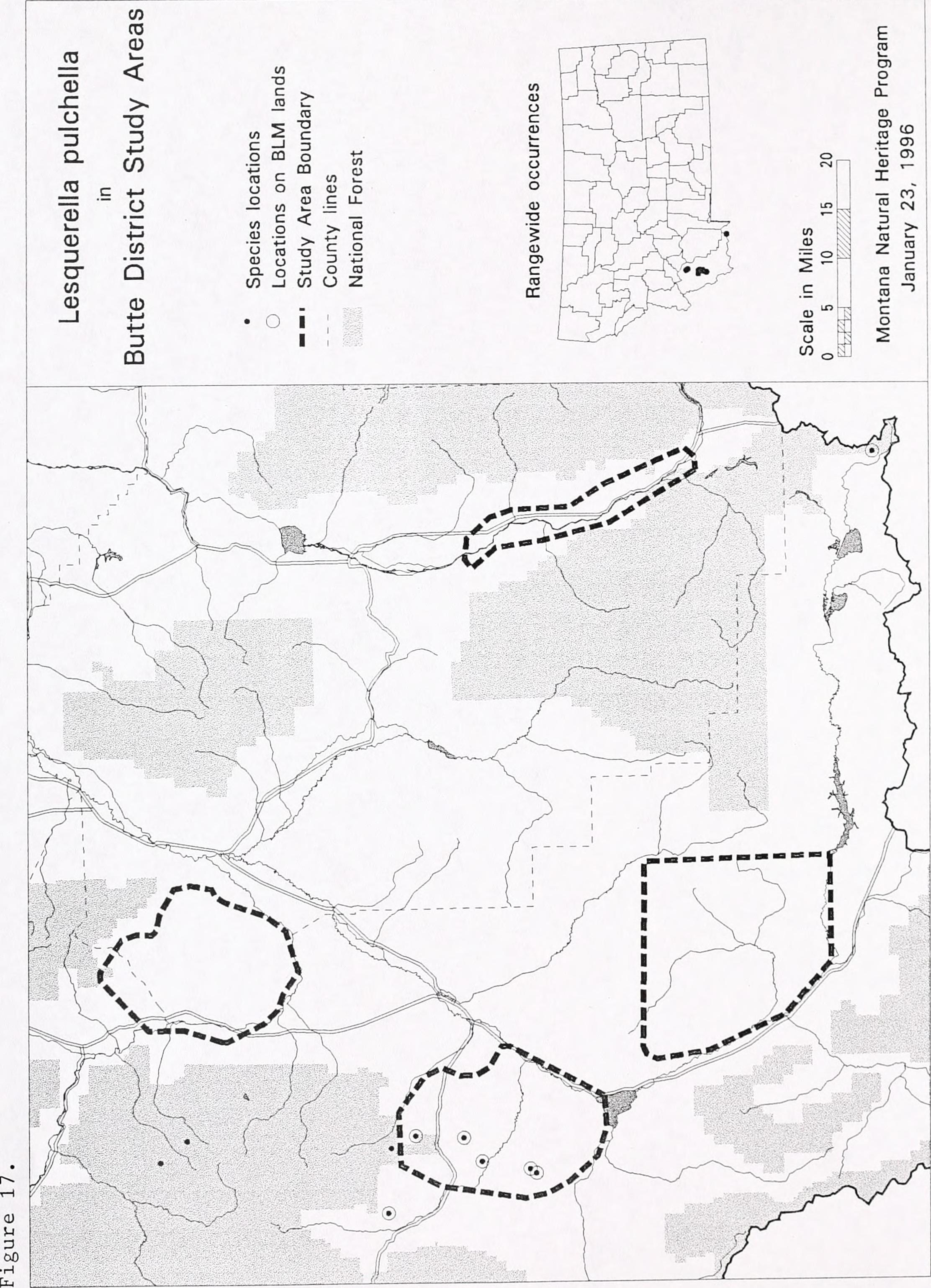 File Sensitive plant species surveys Butte District Beaverhead and