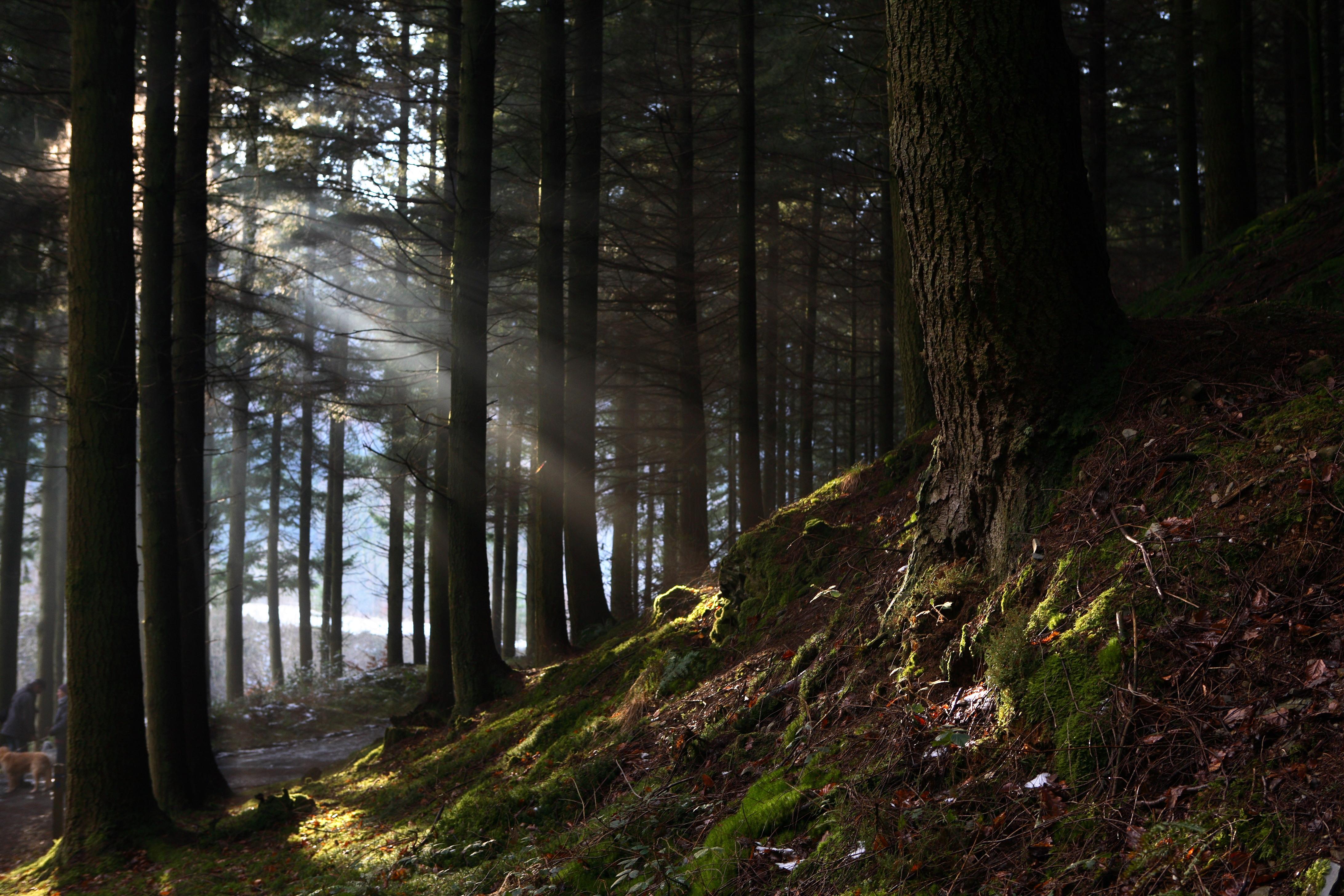 части практически картинки леса как в сумерках современная двухкомнатная