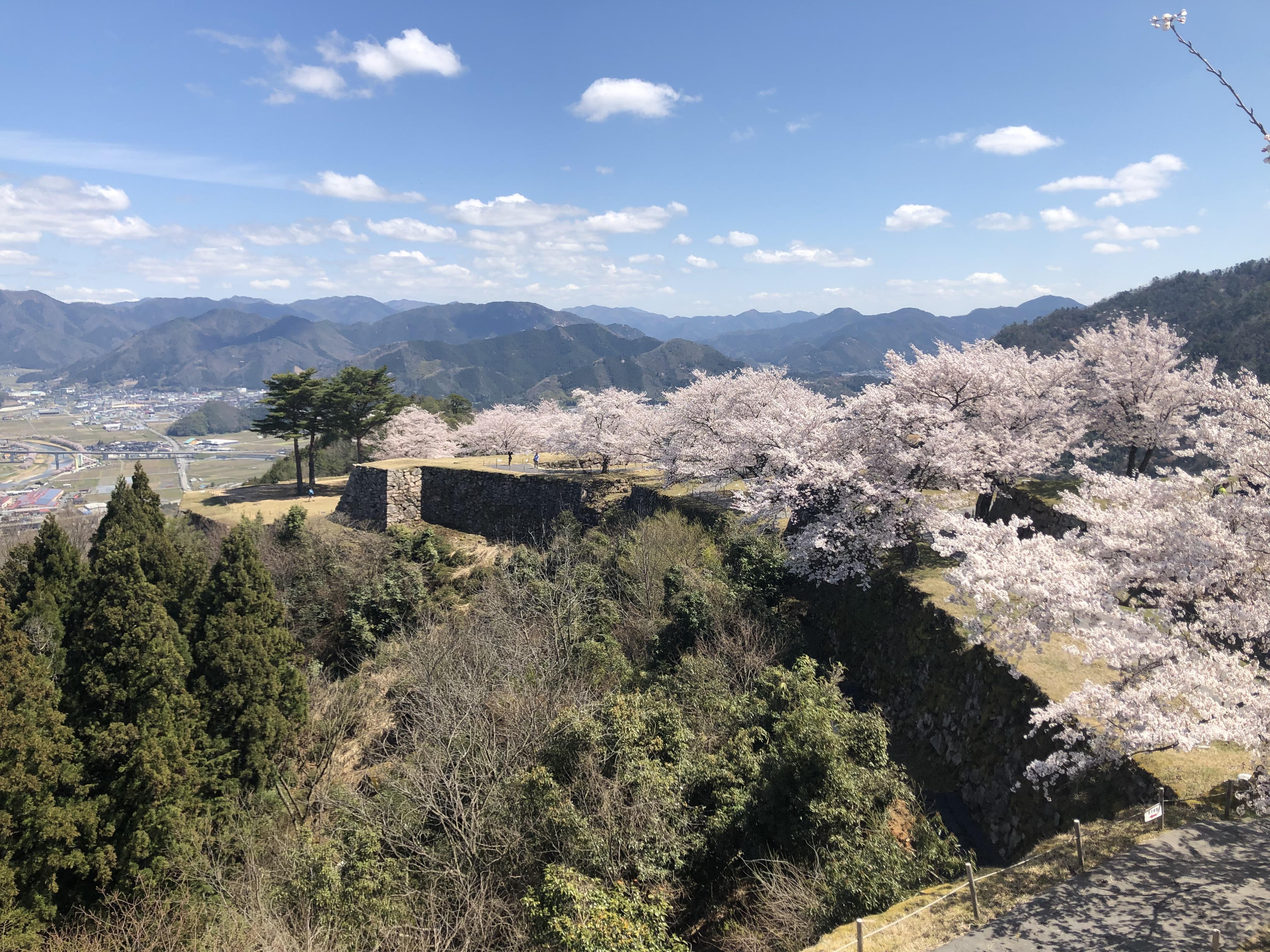 Takeda Castle Sakura7.jpg