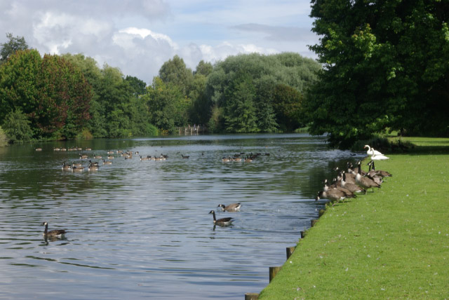 The lake, The Vyne - geograph.org.uk - 943985