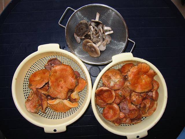 File:Ventoux champignons.jpg