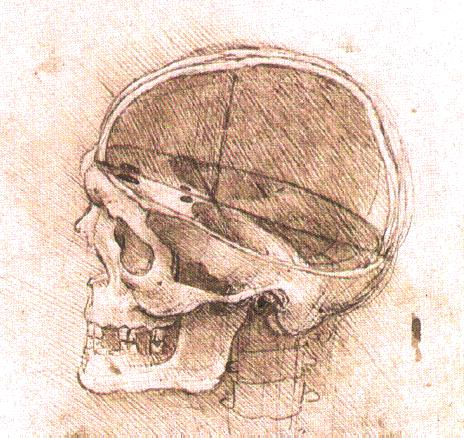 ファイル:View of a Skull II.jpg