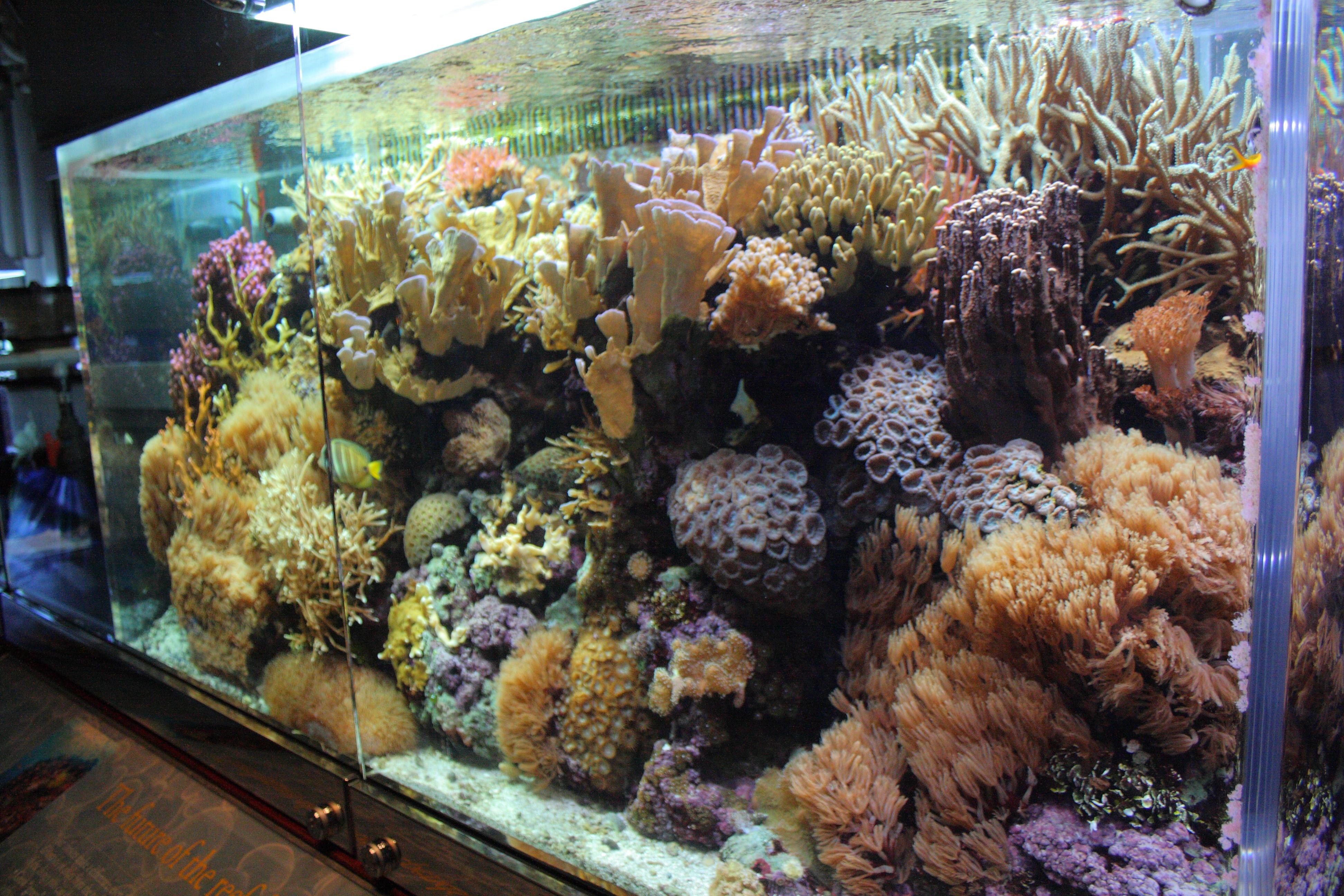 File Wild Reef At Shedd Aquarium 9 2009 11 15 Jpg Wikimedia Commons