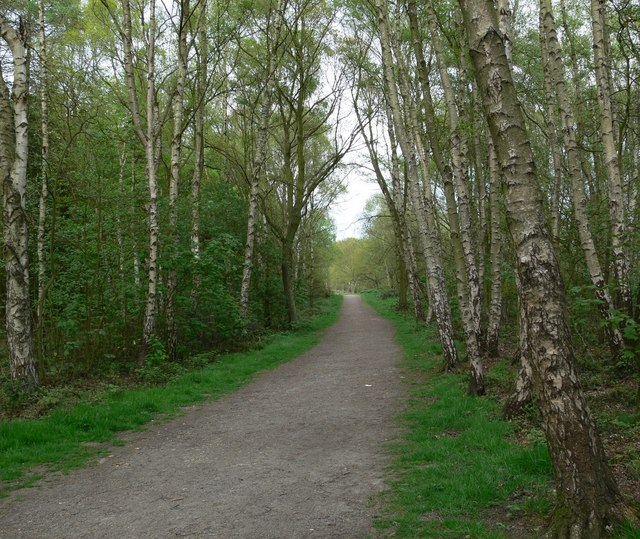 Woodland in Beacon Hill Country Park - geograph.org.uk - 409996