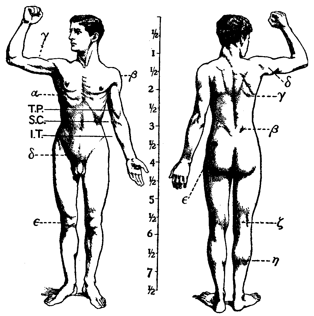 Human Musculoskeletal System Wikipedia