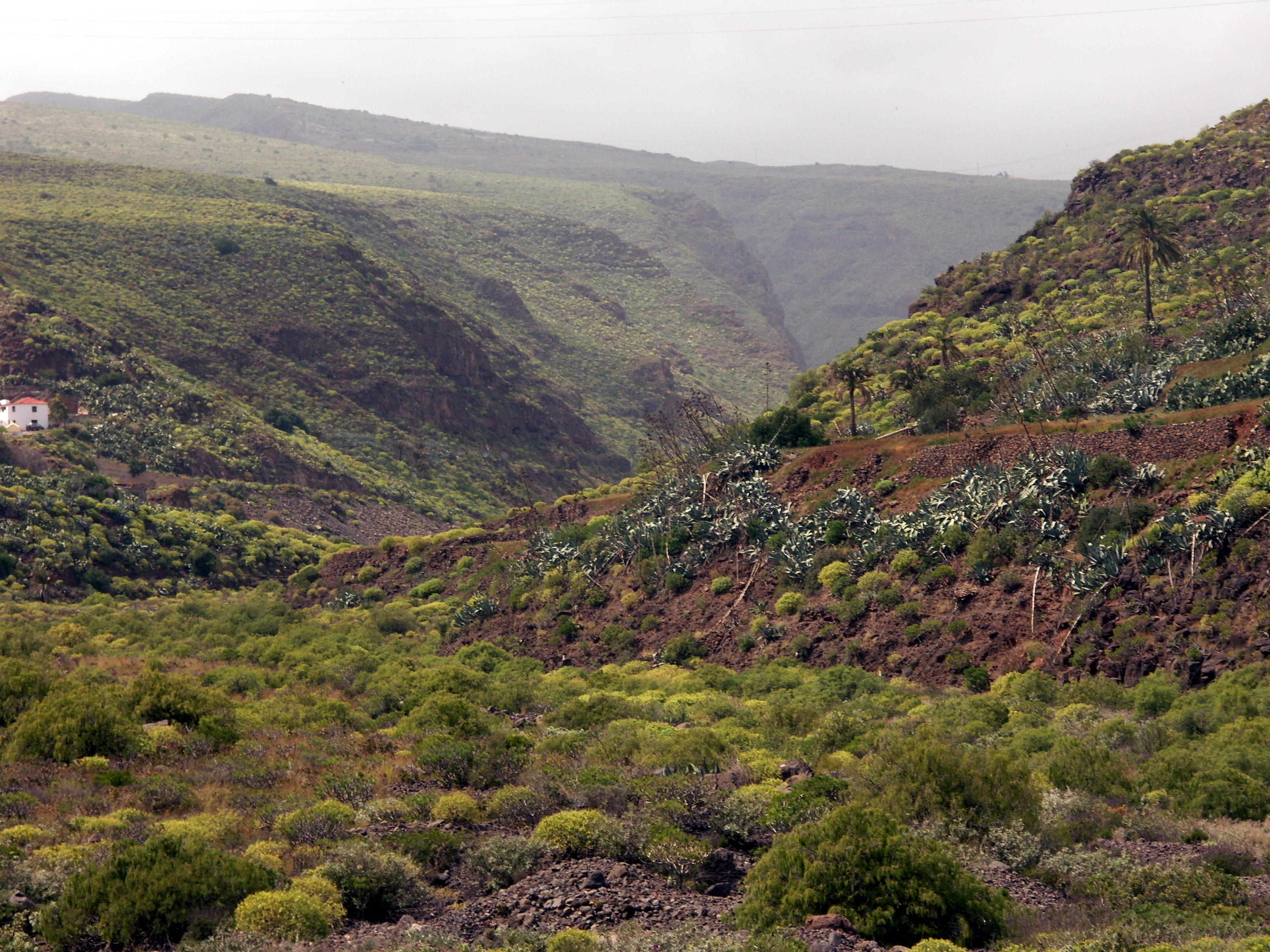 File:Barranco de Guayadeque Gran Canaria Spanien freigestellt.jpg