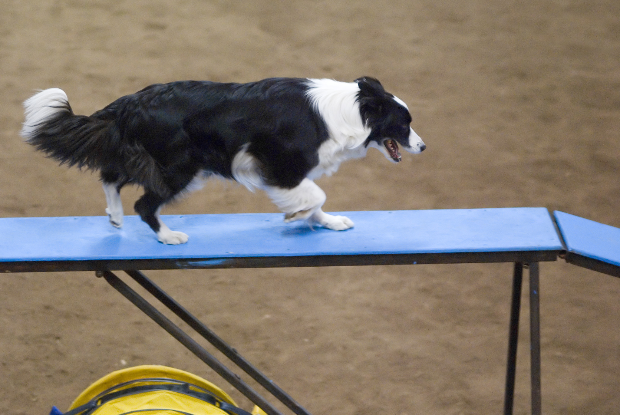 Dog Agility For Sale