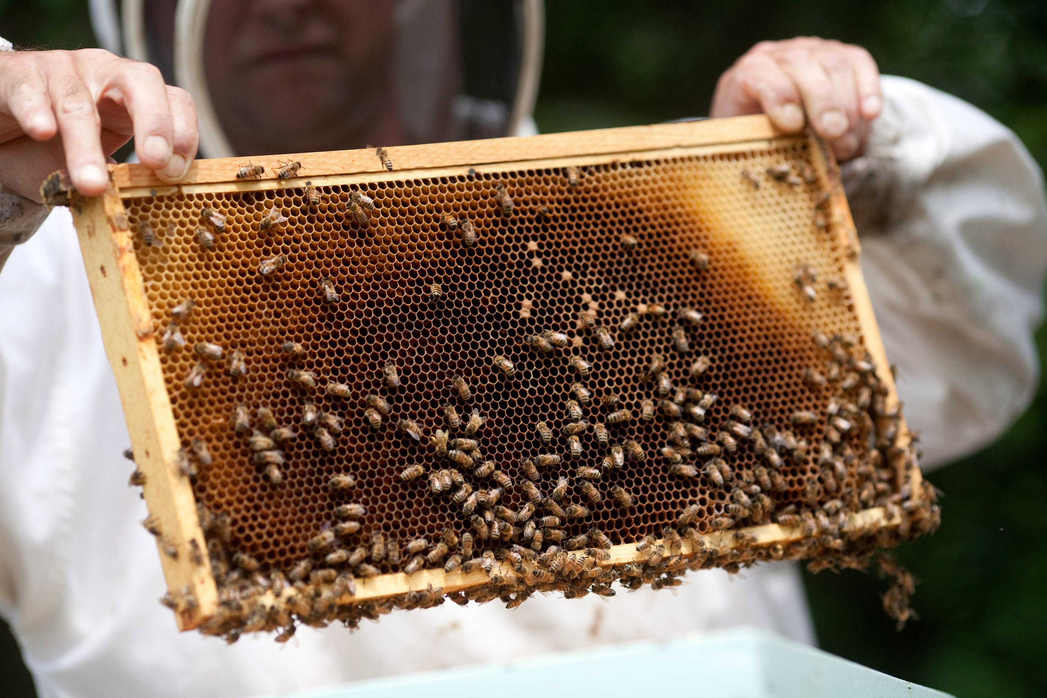 honey nut cheerios gets rid of mascot to raise awareness