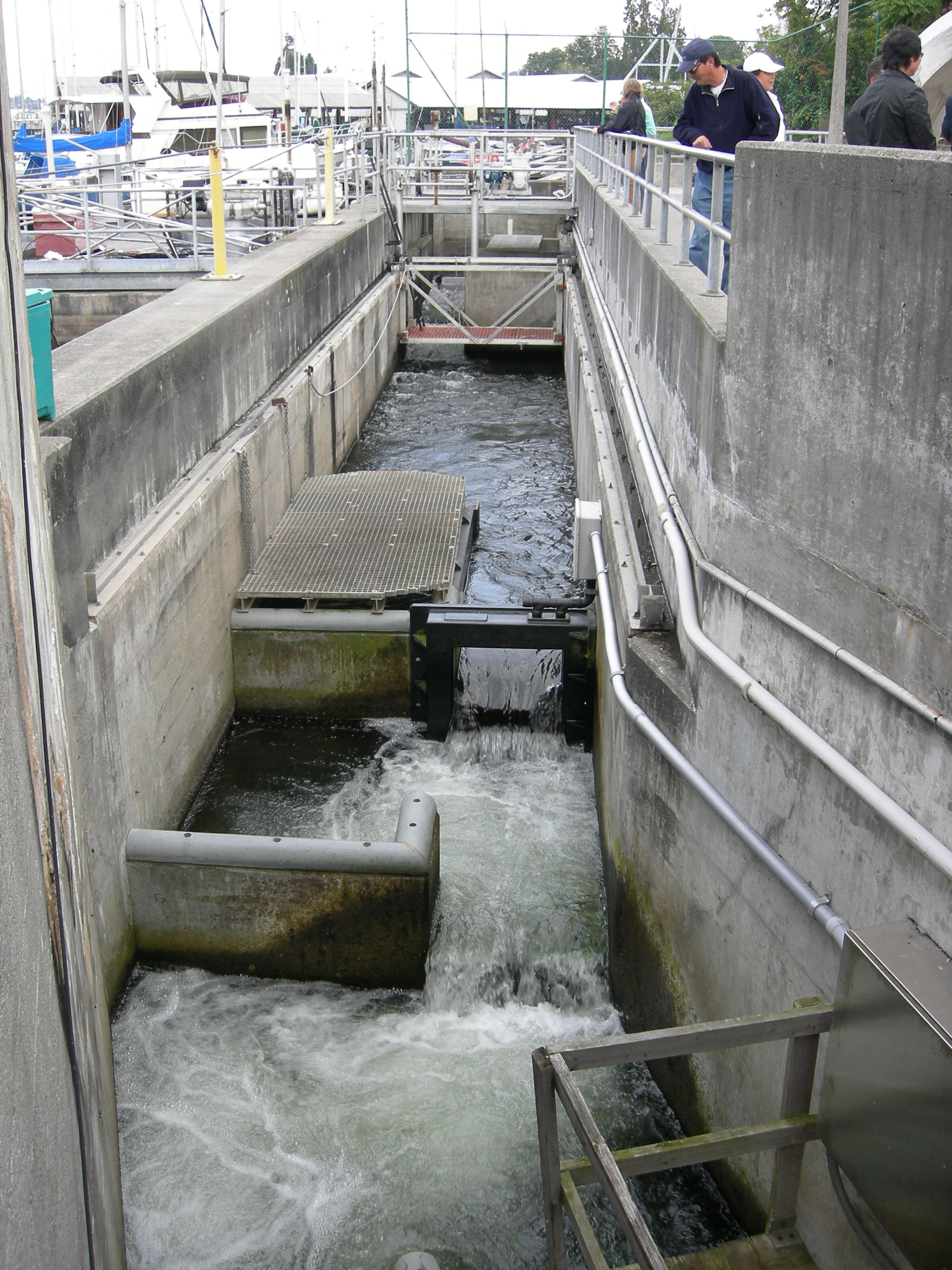 File chittenden locks fish ladder wikimedia commons for Dam fish count