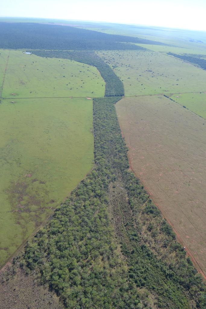File:Corredor Florestal - Pontal do Paranapanema.jpg - Wikimedia Commons