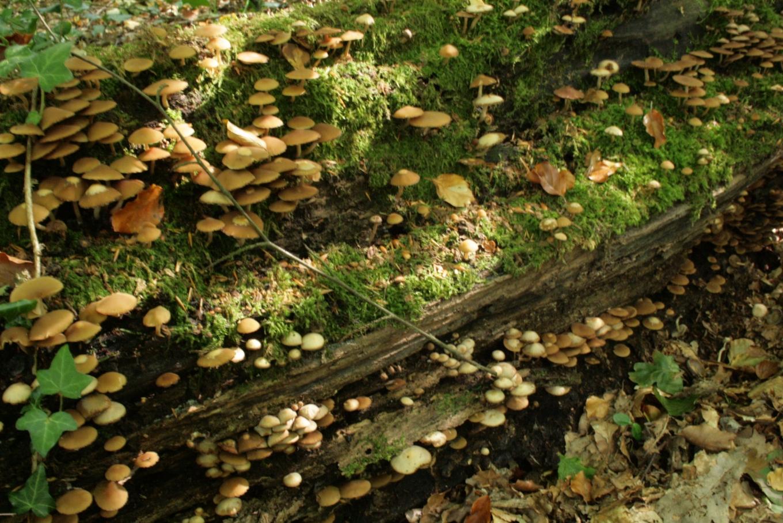 Description draved skov nedbrydning9