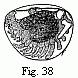 Edriophthalma-38.png
