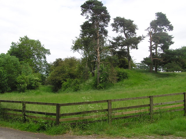 Fir Trees at Coatham Stob. - geograph.org.uk - 186075
