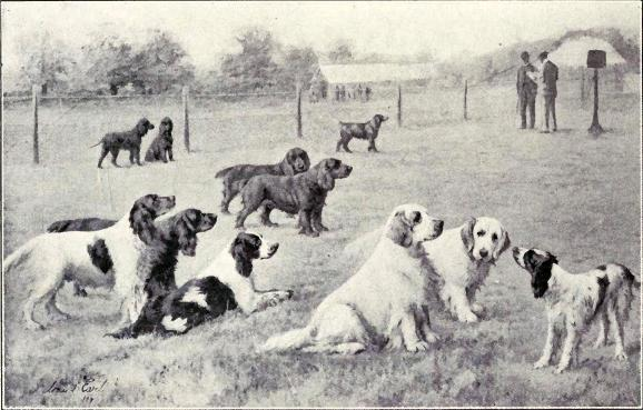 Image Result For Service Dog In