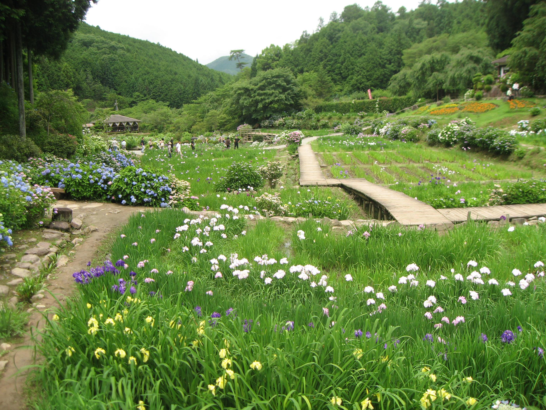File:Hananosato Takidani Japanese Iris Garden01