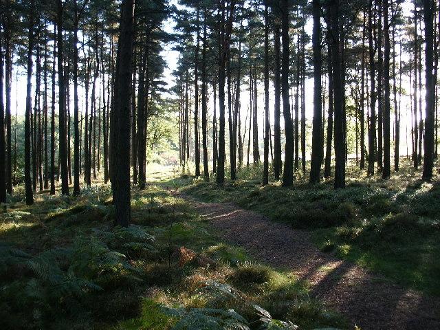 Kirkhill Forest, Tyrebagger hill. - geograph.org.uk - 91286