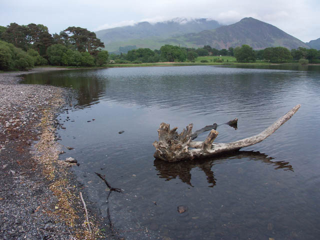 Lakeshore with driftwood - Bassenthwaite Lake - geograph.org.uk - 368224