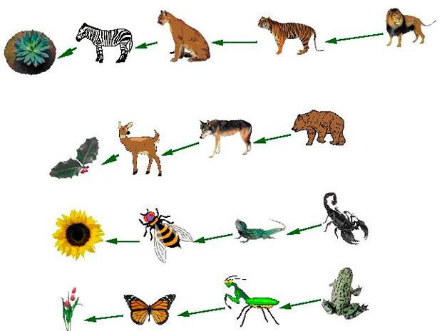 20 animales carnivoros yahoo dating 1
