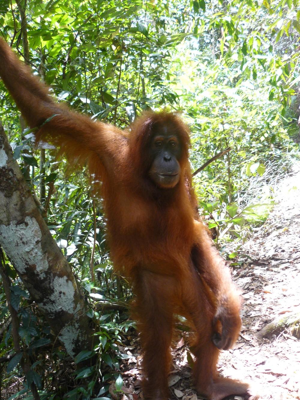 Sex xxx orangutan nudes pics