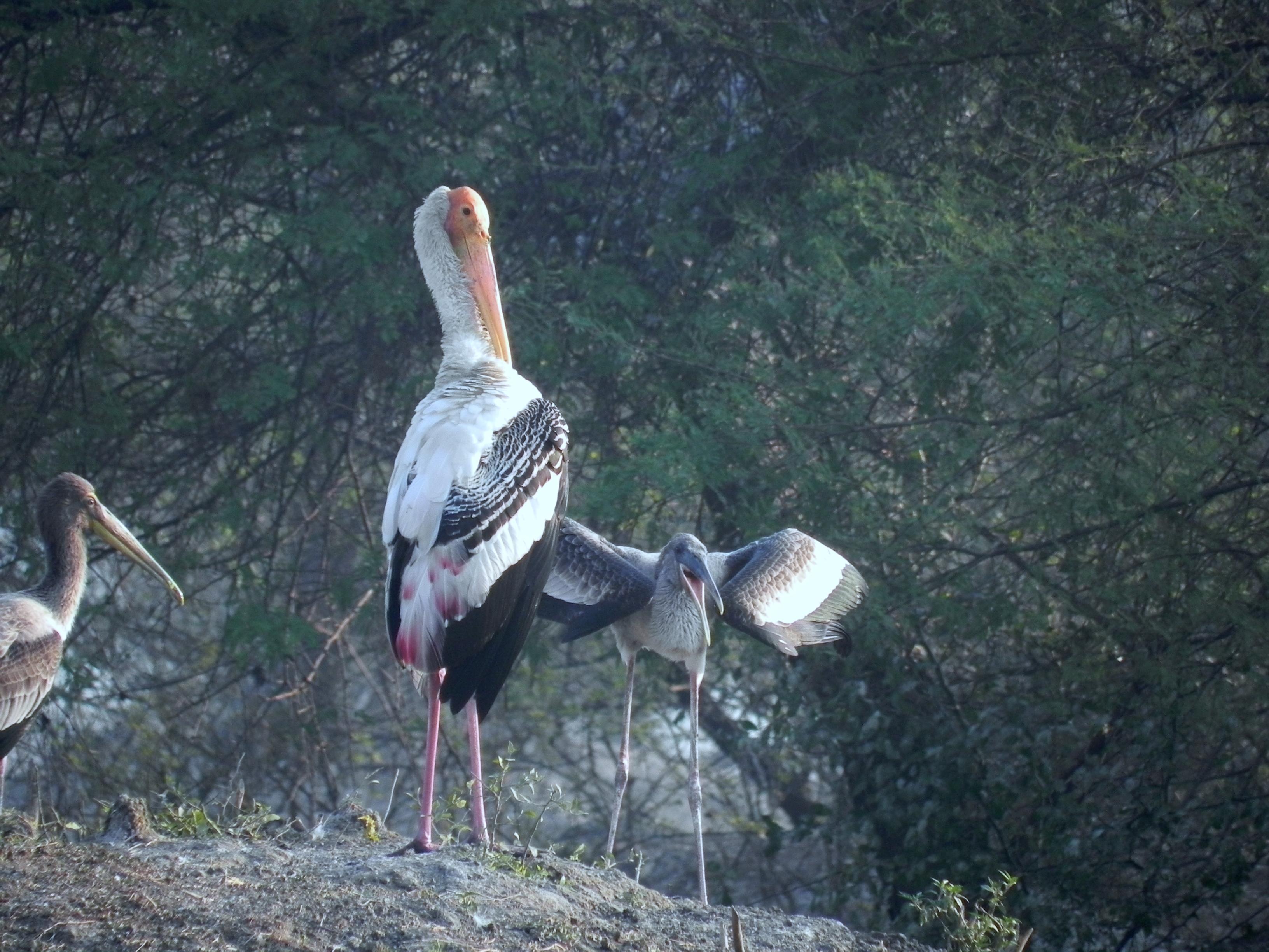essay on bharatpur bird sanctuary