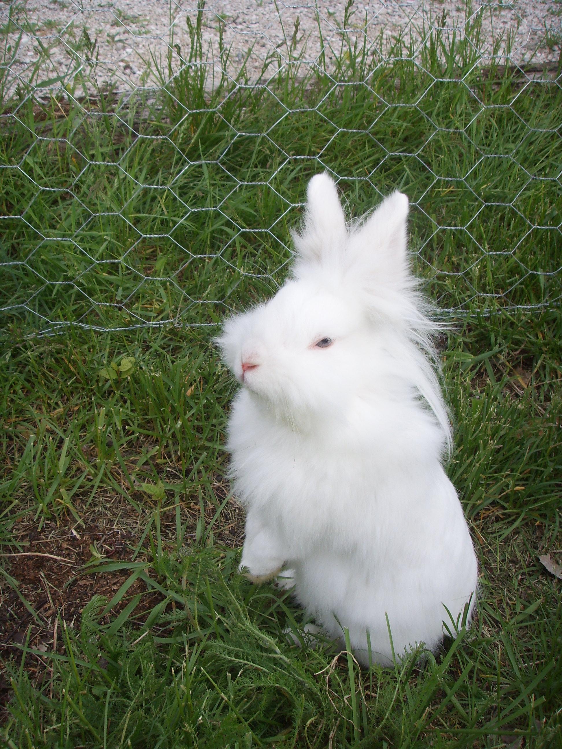 Pissed off rabbit