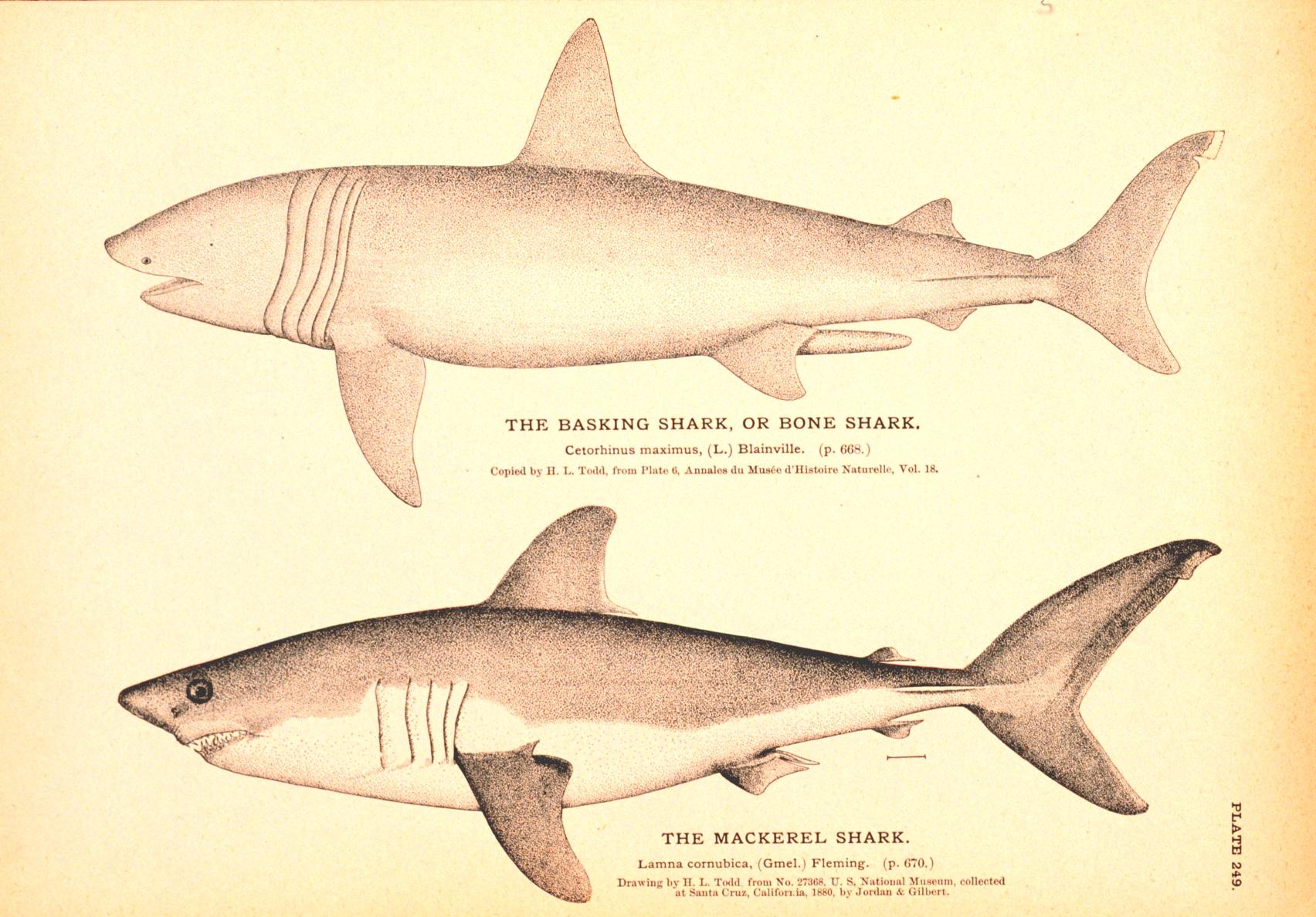 Great White Shark Sightings In Rhode Island